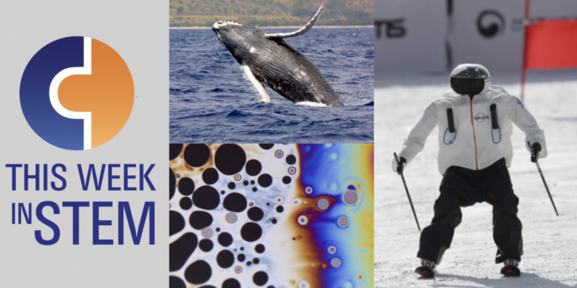 This Week in STEM: Robots that Ski and #WhaleWeek