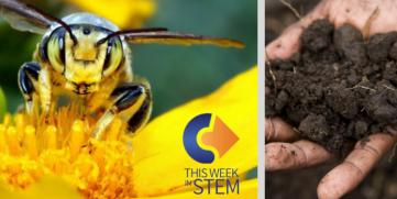 This Week in STEM: Soil & Bees