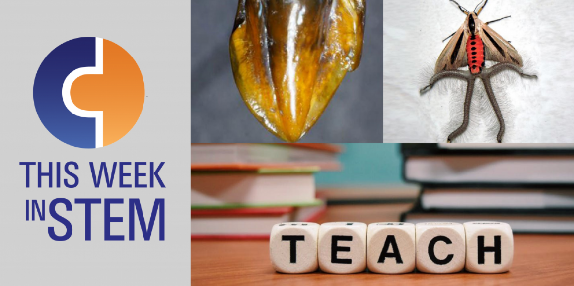 This Week in STEM: History Mysteries and Tentacled Moths