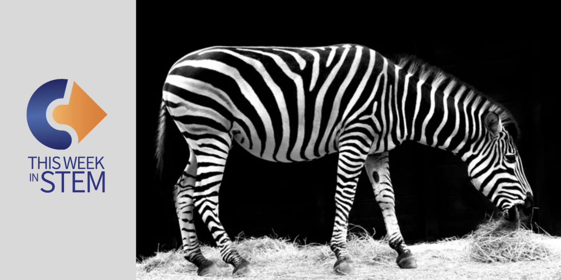 This Week in STEM: Zebra Stripes and a Day in Space