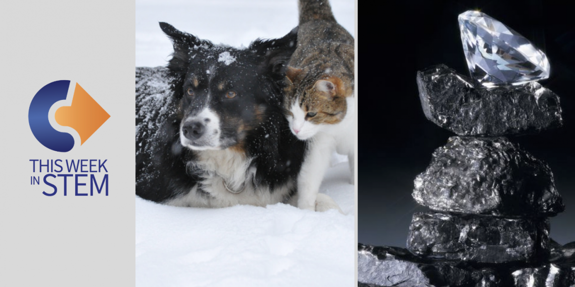 This Week in STEM: Pets, Riddles, and Diamonds