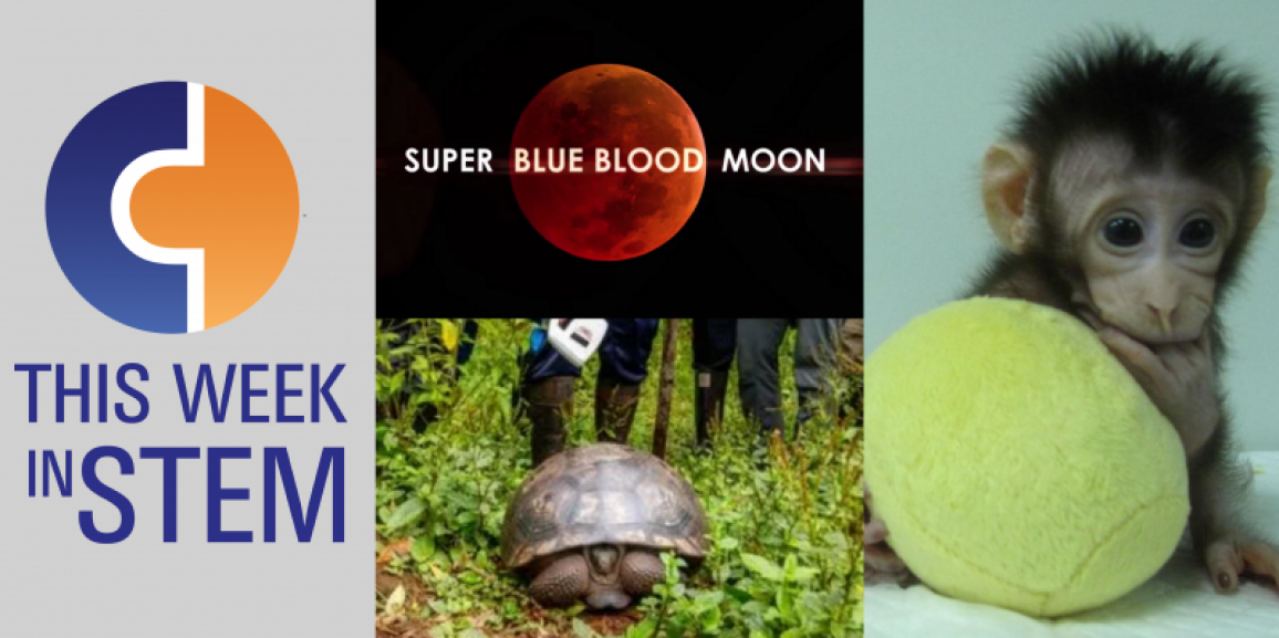 This Week in STEM: Cloned Primates and Saving Tortoises from Climate Change